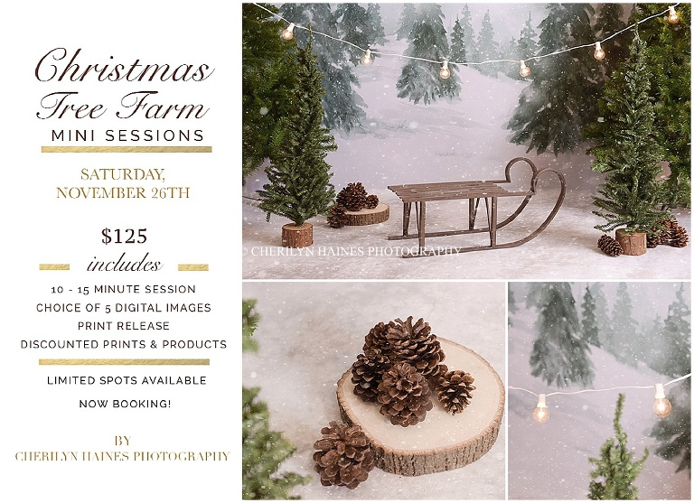 Christmas Tree Farm Mini Sessions.Christmas Tree Farm Mini Sessions Baton Rouge La Newborn